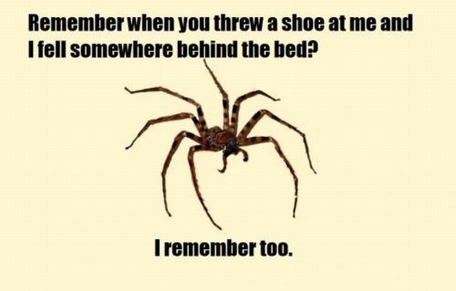 Funny pictures of a spider hidden behind your bed coming for How to stop spiders coming in your house